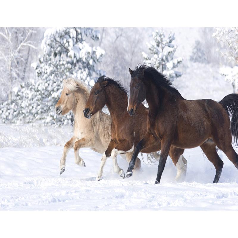 malen nach zahlen drei pferde im schnee malen nach. Black Bedroom Furniture Sets. Home Design Ideas