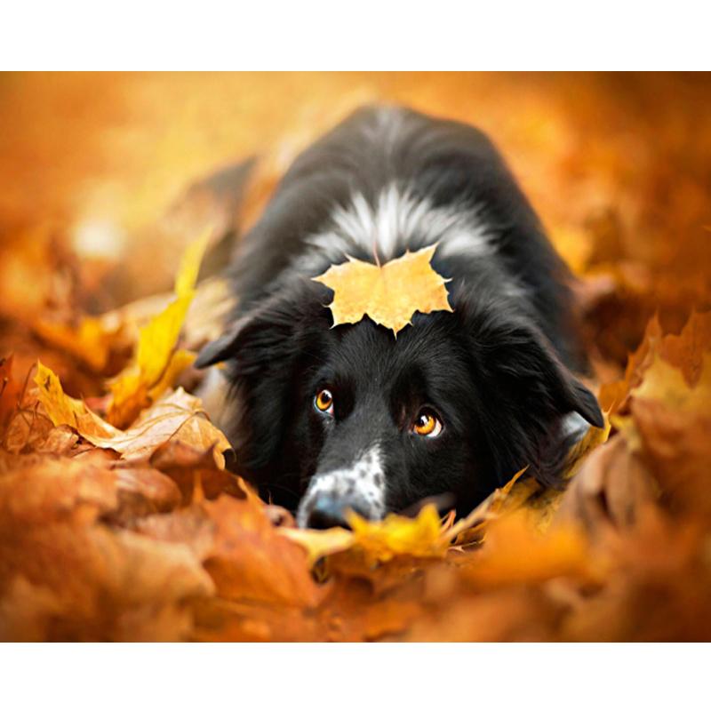 Malen Nach Zahlen Liegender Hund Herbst