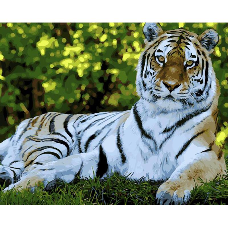 Malen nach Zahlen - Entspannter Tiger - Malen nach Zahlen EU